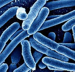 MicrobiotaMi 2020