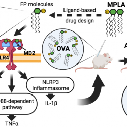 Synthetic Glycolipids as Molecular Vaccine Adjuvants: Mechanism of Action in Human Cells and In Vivo Activity